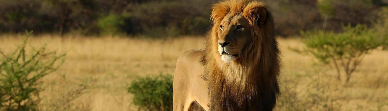 Lionsclub ter beke